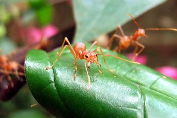 Combatir hormigas en el jardín en forma casera | Urbeco